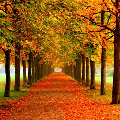 Promocja jesienna Stalgast